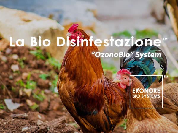 Disinfestazione acaro rosso del pollo a Napoli