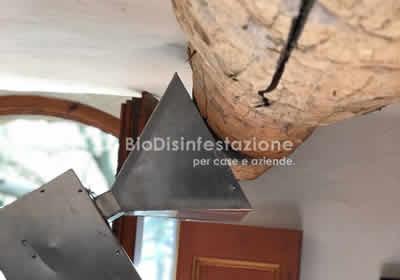 Disinfestazione tarli del legno a Napoli